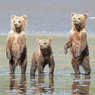 Alaska in the Summer