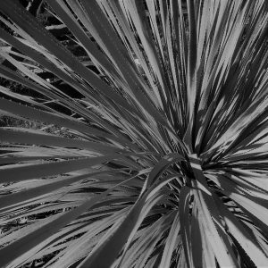 Day 1: Agave